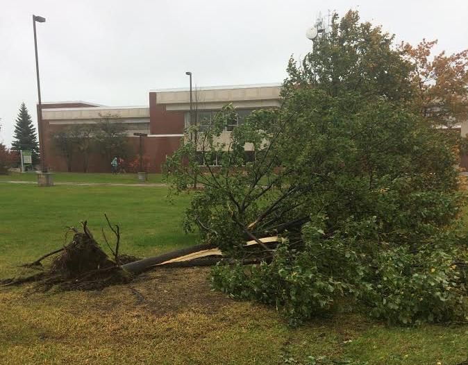 Photo by Lindsey Eaton: A downed tree lies in the Academic Mall at NMU, one of many that was knocked down by high wind speeds around Marquette county on Tuesday. In other areas, downed trees have resulted in power outages for local residents.