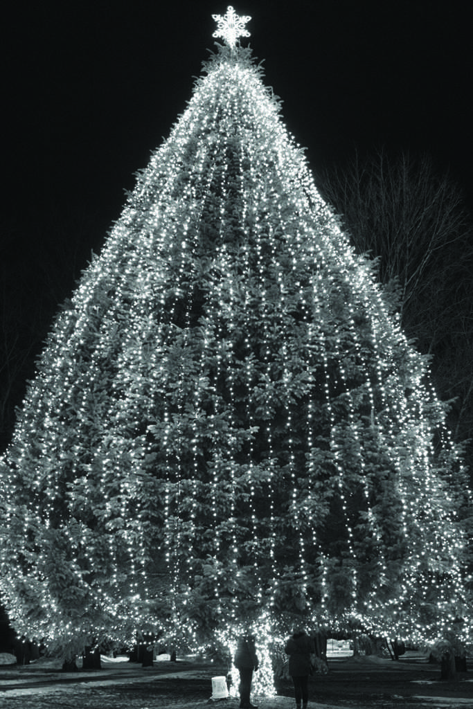 The large pine tree outside of the UC got lit this holiday.  Photo by Kat Torreano