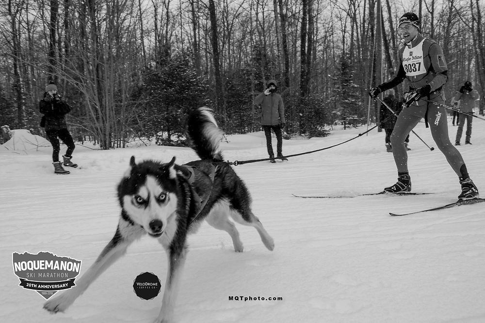 An animoosh skijor racer and his husky from the 2018 event race through the snow. The Noquemanon Ski Marathon is composed of nine races and is one of the top-three largest ski  marathons in the nation. The event typically attracts over 1,500 cross country skiers.  Photo courtesy of Andy Gregg.