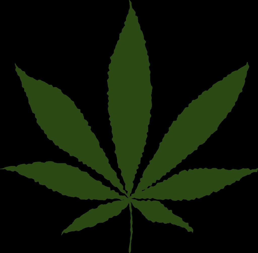 No+change+in+marijuana-related+crime