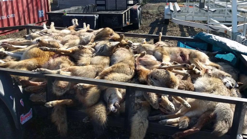 Michigan wildlife killing contests unacceptable