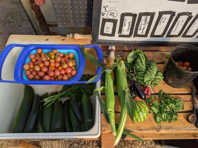 Photo of NMU Hoop House harvest.