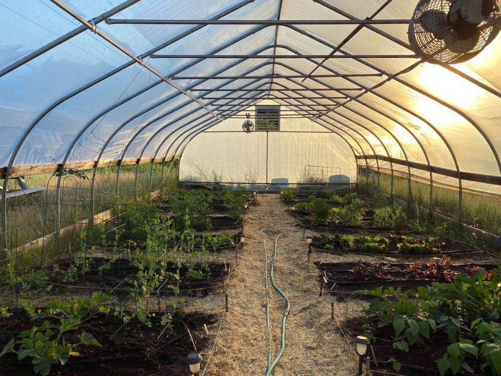 Plants inside a greenhouse