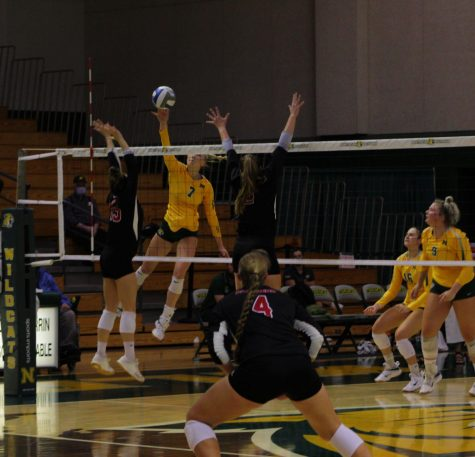 ROARING RESPONSE—Freshman middle blocker Olivia Webber attempts a spike against Davenport on Sunday, Sept. 19. NMU looks for a response this weekend on the road against Northwood and Lake Superior State. Brendan Sullivan/NW