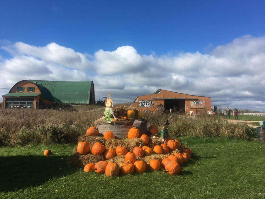 Hayes Corn Maze provides fun for all ages including a pumpkin patch, corn maze and hay ride.