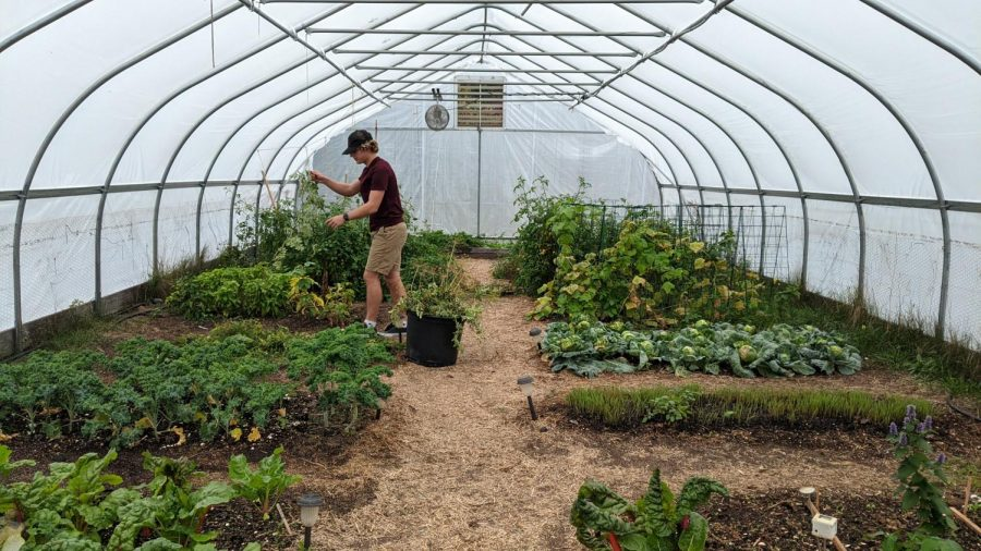 Reid Kenyon cleans out a garden bed of watermelon vines to prepare it for a new crop. Kenyon is one of the student volunteers helping keep the hoop house running and growing produce for the community to enjoy.